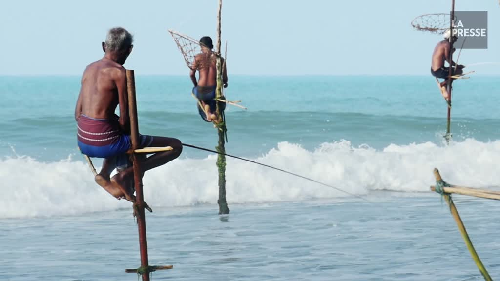 Le Sri Lanka rouvre aux touristes