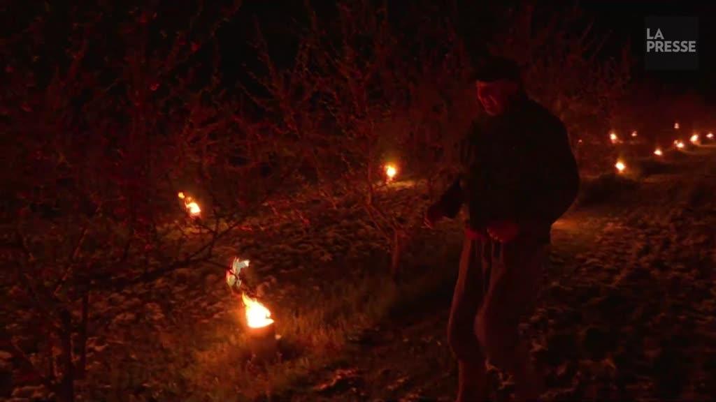 En Alsace, des ??bougies?? pour préserver les vergers du gel