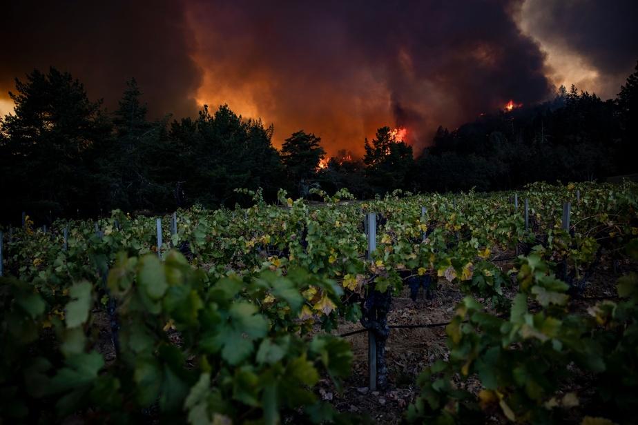 Les vignobles de Napa Valley dévorés par les flammes