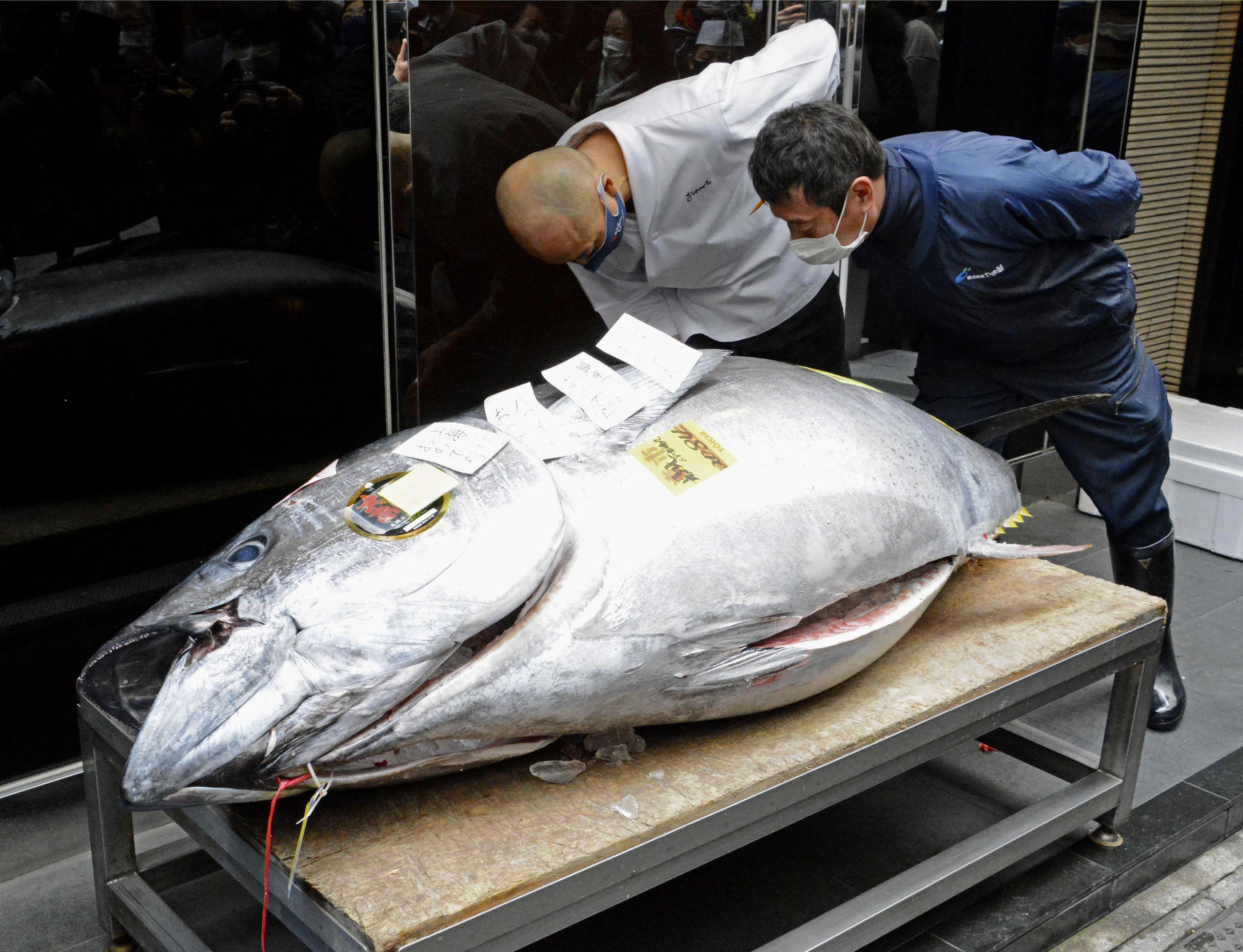 Japon : une célèbre vente aux enchères de thon affectée par la pandémie